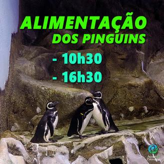 Alimentação dos Pinguins