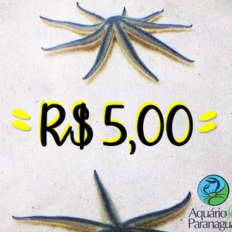 A Promoção de R$5,00 está de volta!