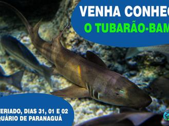 Venha conhecer o Tubarão-bambu!