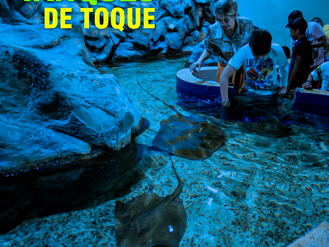 Tanques de toque