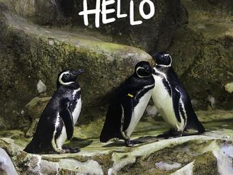 Deem boas vindas aos mais novos moradores do nosso pinguinário. 🥰