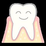 健康な歯茎