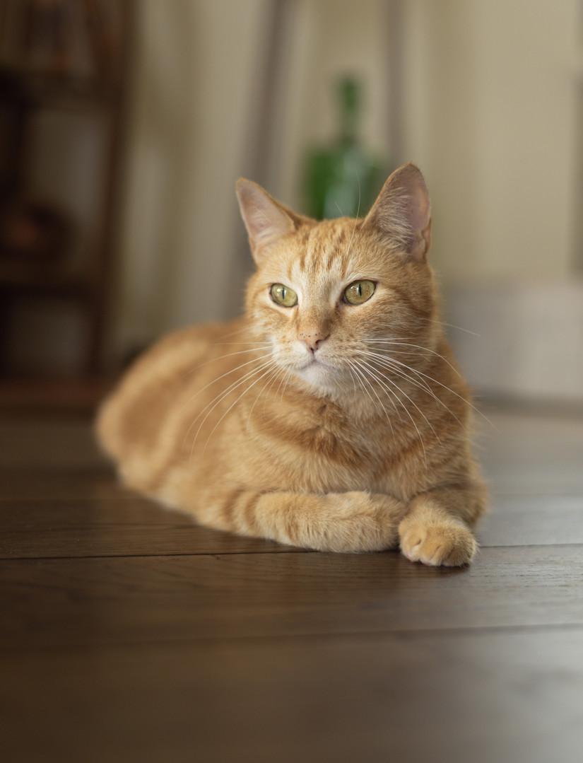 Lisbeth katten-41.jpg