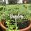 Thumbnail: Plant /Herb Acrylic Stakes