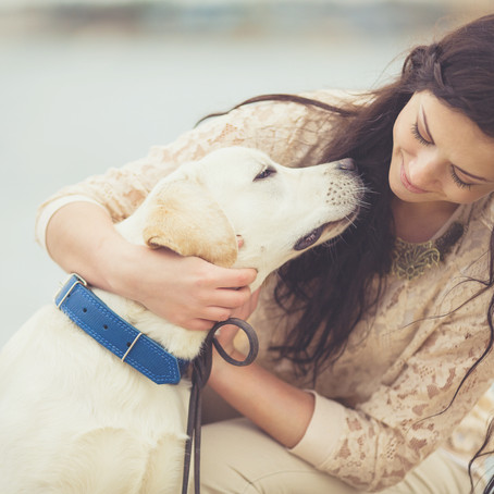 4 WAYS TO KEEP YOUR SENIOR DOG COMFORTABLE AT HOME