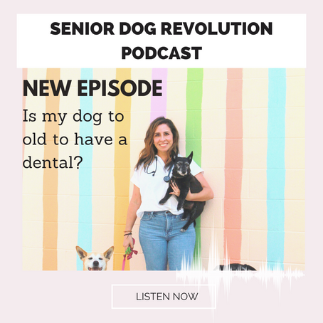IS MY DOG TOO OLD FOR A DENTAL?
