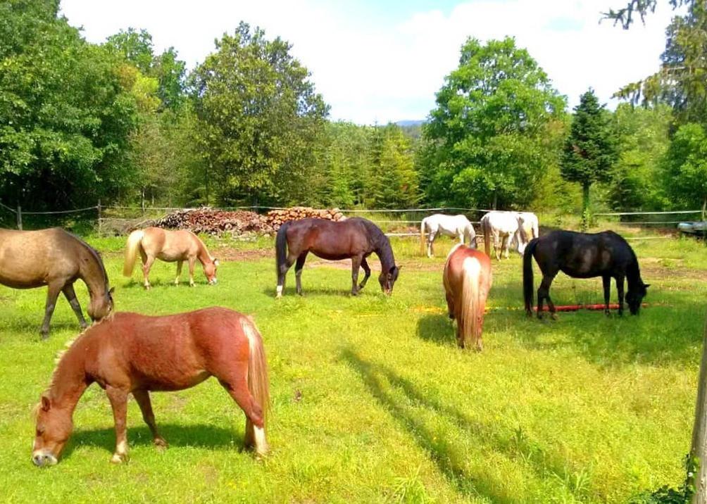 Jardí de cavalls