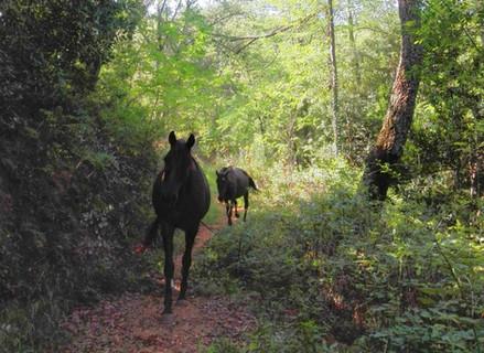 Bany de bosc amb cavalls