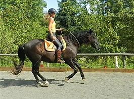 Clase equitación doma natural