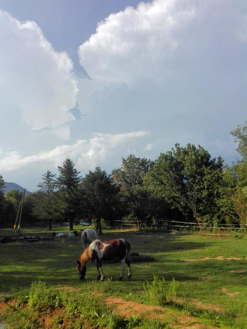Pasturant sota els núvols