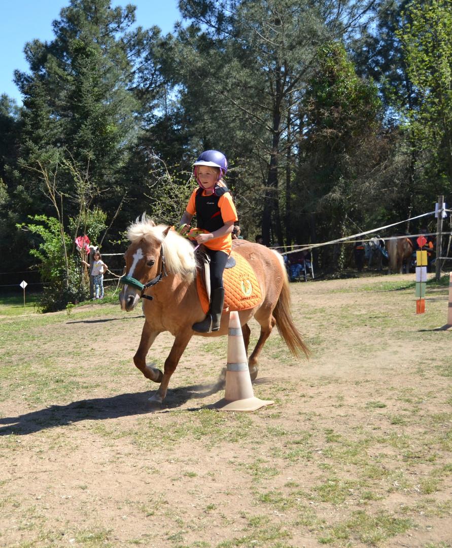 T.R.E.C. Bitless Natura a Cavall