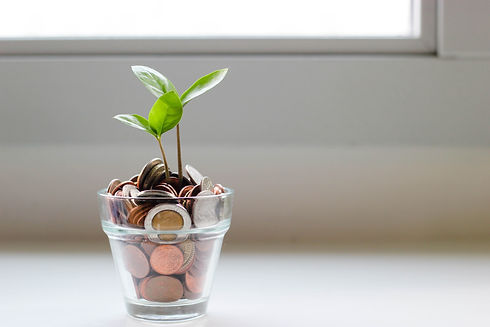 money and plant in cup_window background