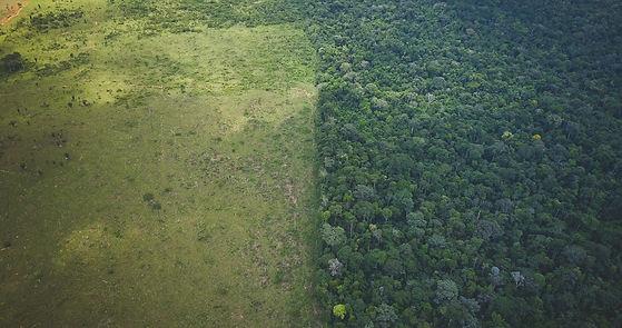 Deforested.jpg