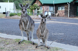 Grampians National Park - Australia