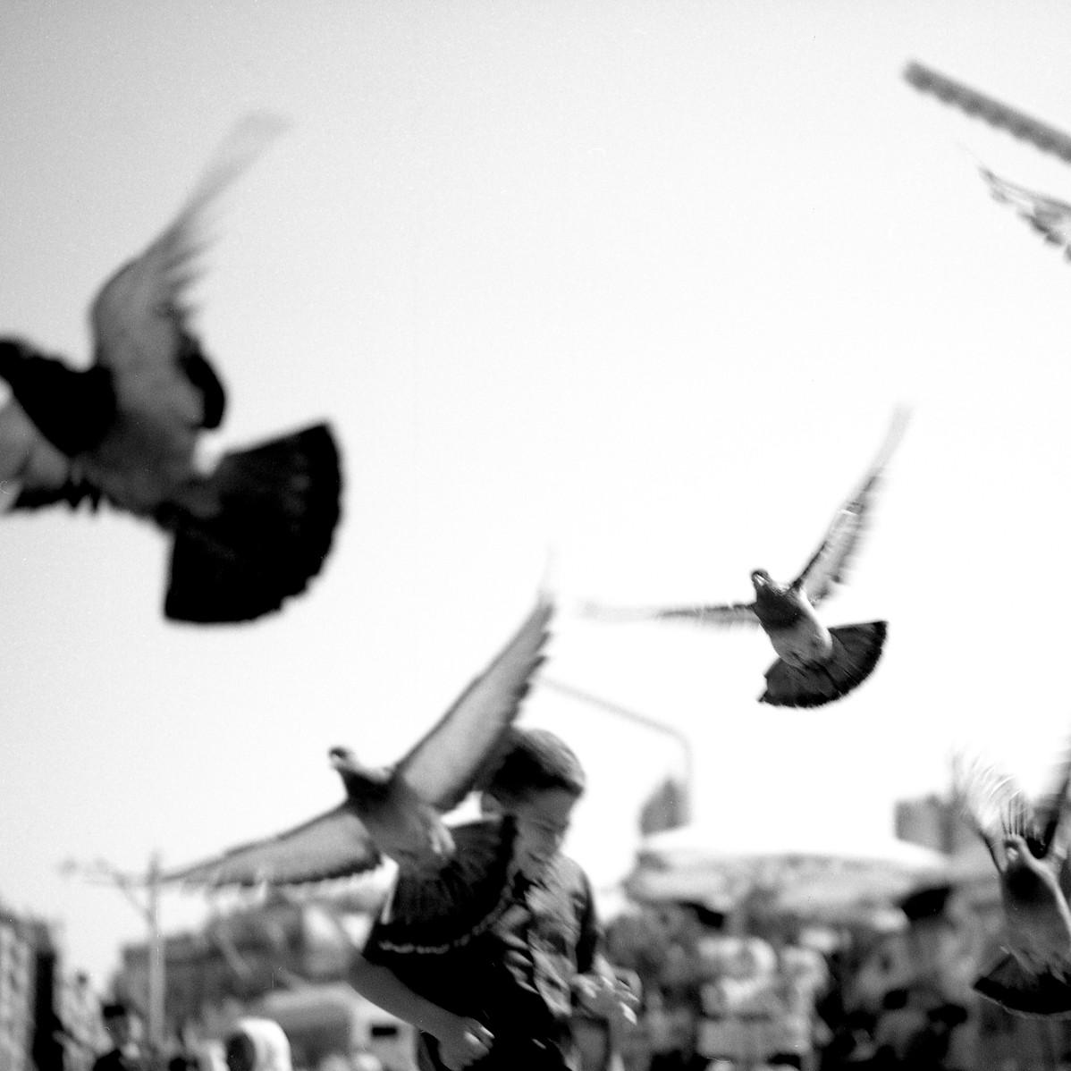 Pigeons in Taksim Square, 2017