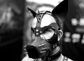Dog Mask, 2017