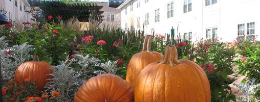 Health Cap Photo Contest Pumpkins