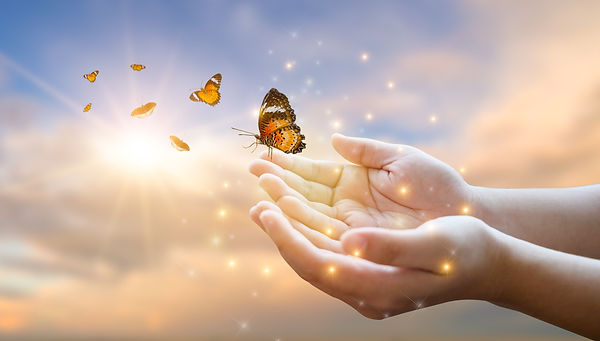 The girl frees the butterfly from the ja