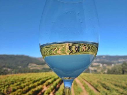 Como assim vinho verde não e verde? Sim, é verdade.