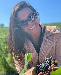 Colhendo uvas no vinhedo da Taittinger
