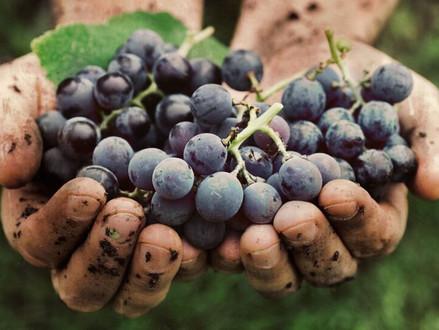 Você sabe a diferença entre vinhos sustentáveis, orgânicos, biodinâmicos e naturais?