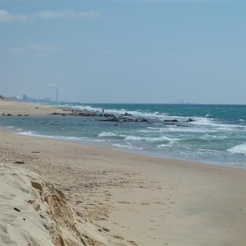 מחוף ניצנים לוות השיקמים