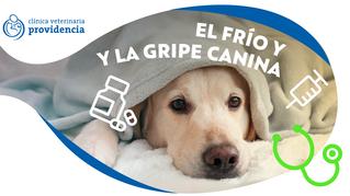 El frío y la gripe canina