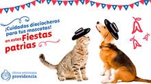 Cuidados para tu mascota en estas Fiestas Patrias