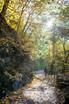 escursionismo_summer_promenade_autumn_blattfall