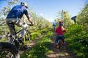 spring_apfelbluete_radfahren_biken_fa