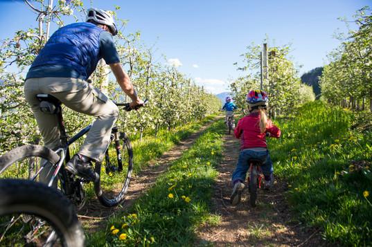 fruehling_apfelbluete_radfahren_biken_fa