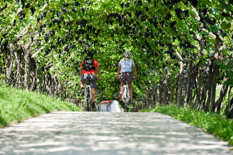 fahrradweg_vinschgau_algund_trauben_laub