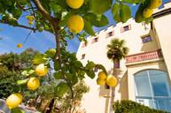 trauttmansdorff_limonaia_lemon_lemon