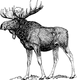 moose-153479_1280.png