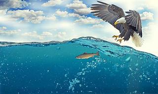 white-tailed-eagle-2015098_1920.jpg
