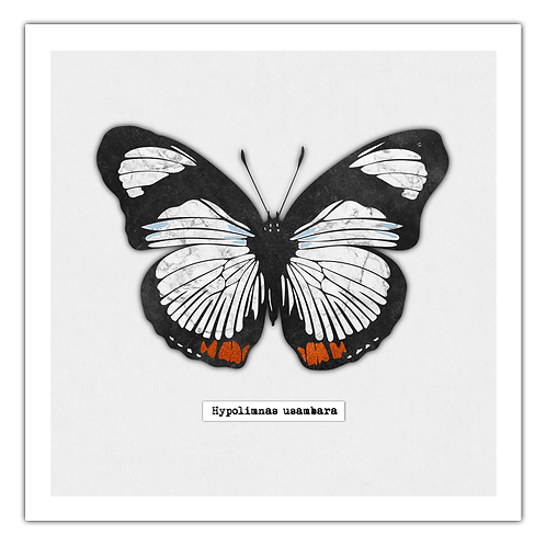 Collaged Butterfly Print
