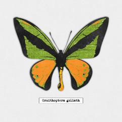greenorangebutterfly-01.jpg