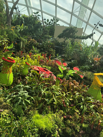 Learning Journey at Flower Dome