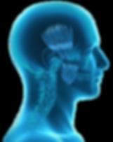 BruxRelief Anatomy Head (web).png