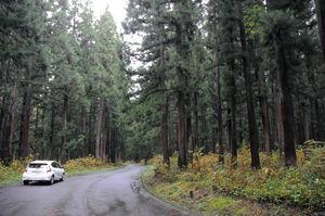 02.11.14森林整備・伊達.jpg