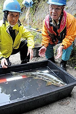 02.10.31西大滝ダム魚道・サケK.jpg