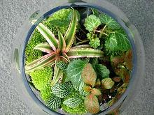Green Terrariums.jpg