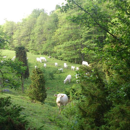 Kossorna har intagit dalen