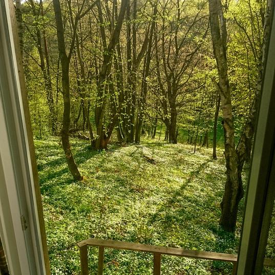 Utsikt från konferensens fönster