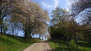 Infartsvägen till Körsbärsdalen B&B