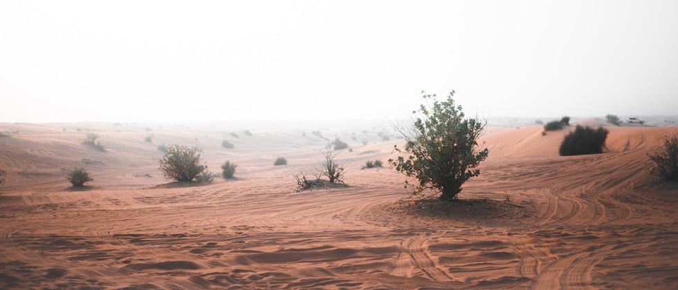 Dubai-008.jpg