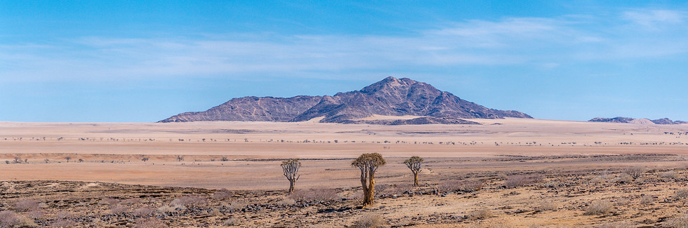 A landscape with Quiver trees in the foreground
