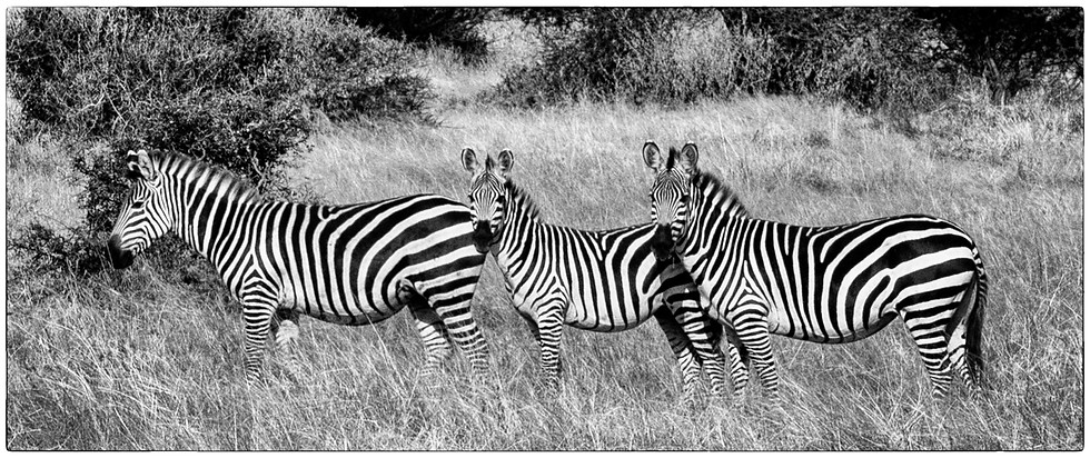 Stripes in Black and White