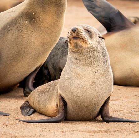 I'm so pretty - baby fur seal