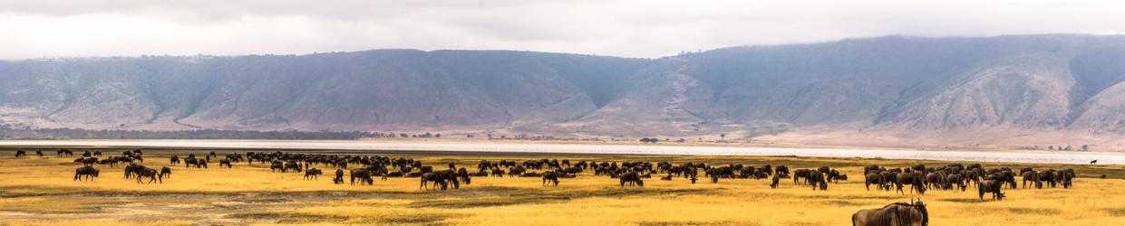 The Migration in Tanzania